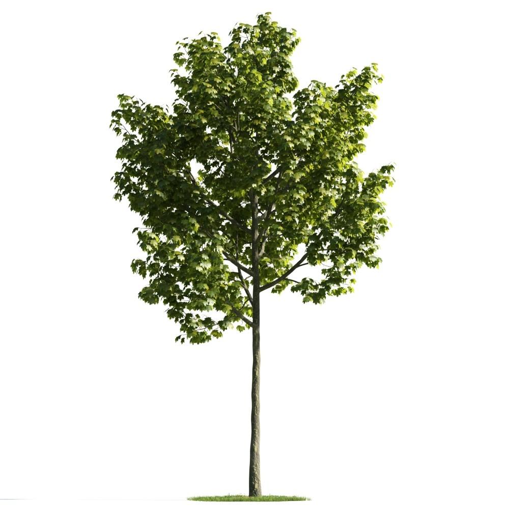 Tree 15 AM176 Archmodels