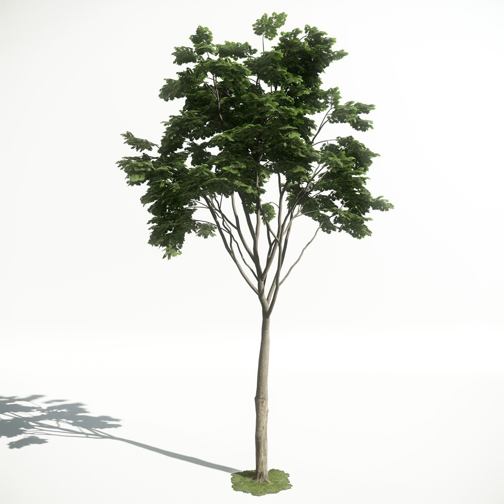 Tree 21 AM1 for CryEngine Archmodels