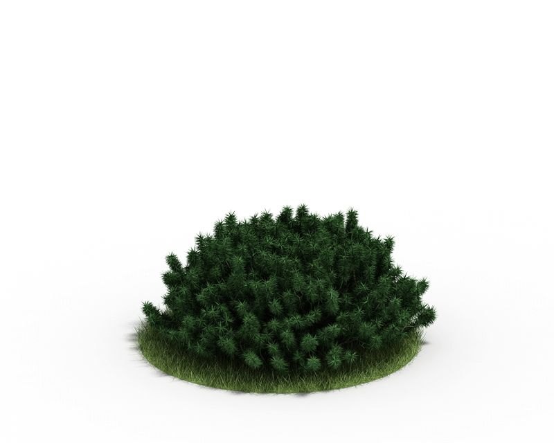 Plant 29 AM4 for Cinema4D Archmodels