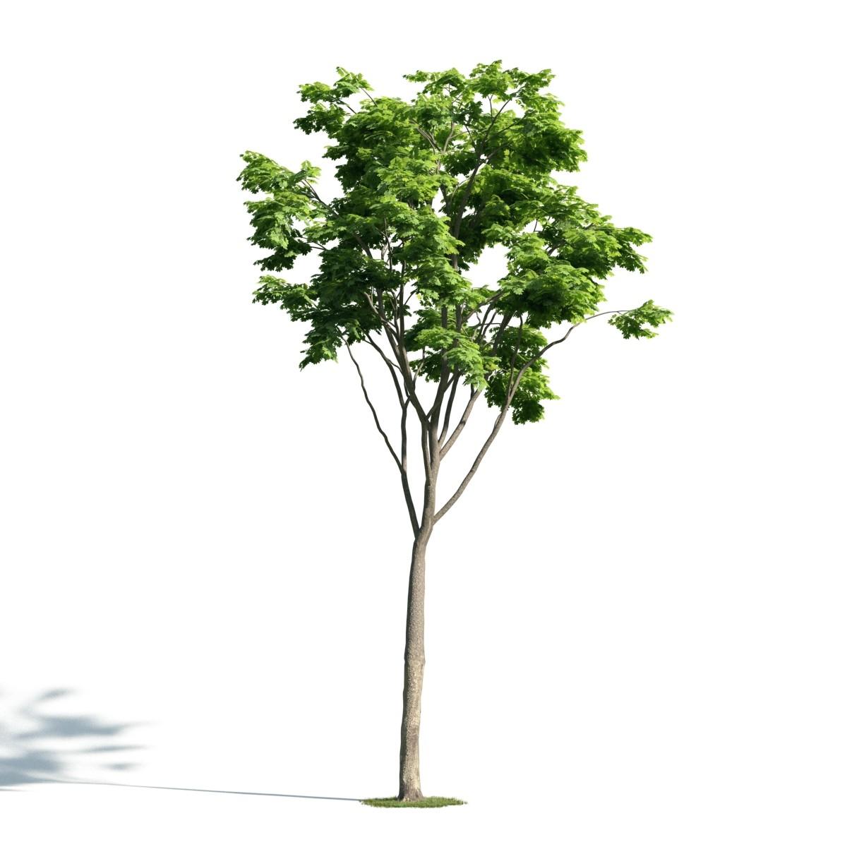 Tree 21 AM171 Archmodels