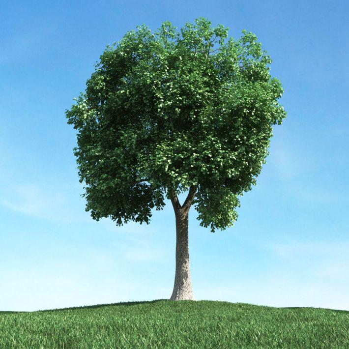 tree 49 AM106 Archmodels