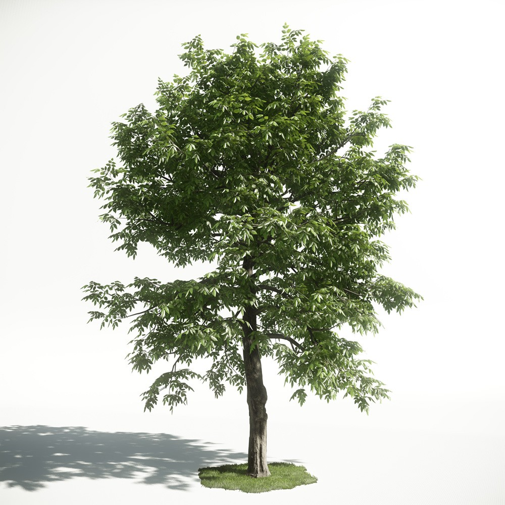 Tree 51 AM1 for CryEngine Archmodels