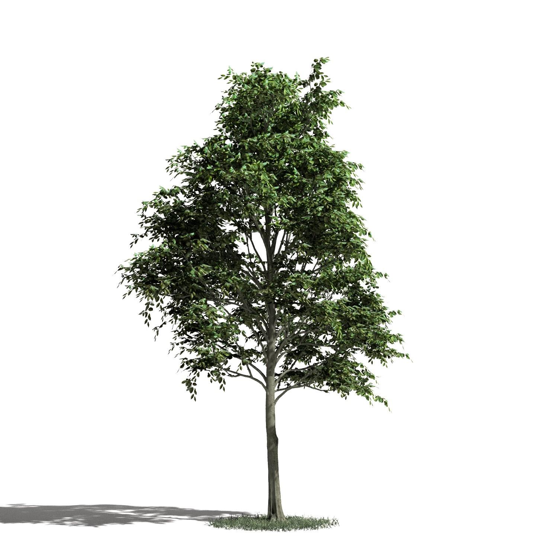 Tree 12 AM1 for Blender Archmodels