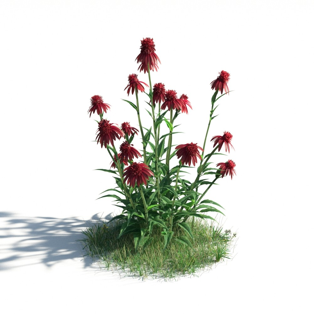 plant 37 AM183 Archmodels