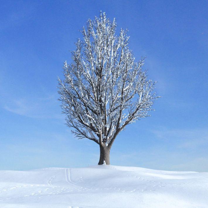 ginkgo tree 28 AM100 Archmodels