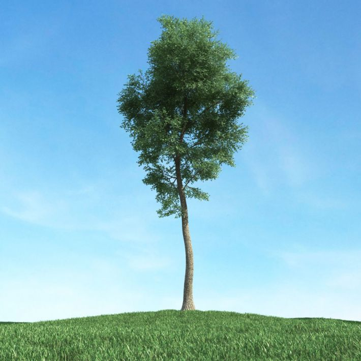 tree 43 AM117 Archmodels