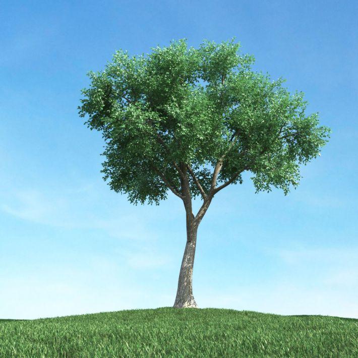 tree 50 AM106 Archmodels