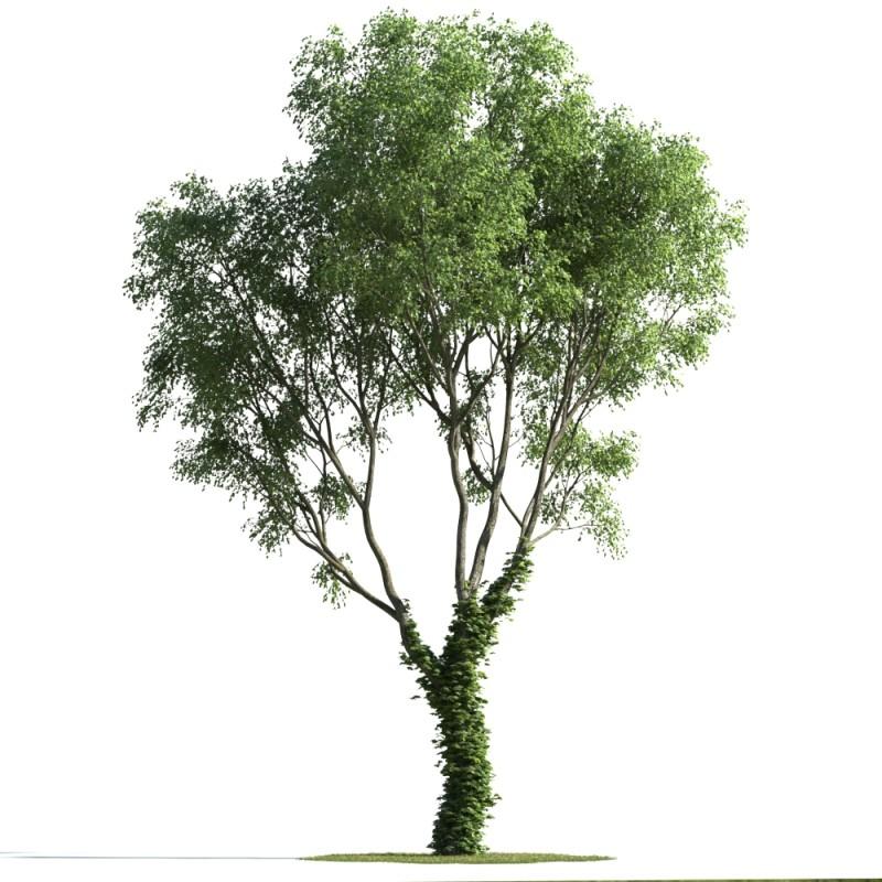 tree 78 AMC1