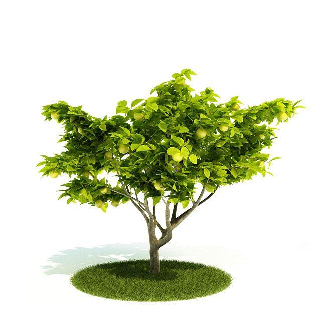 Plant 50 AM52 Archmodels