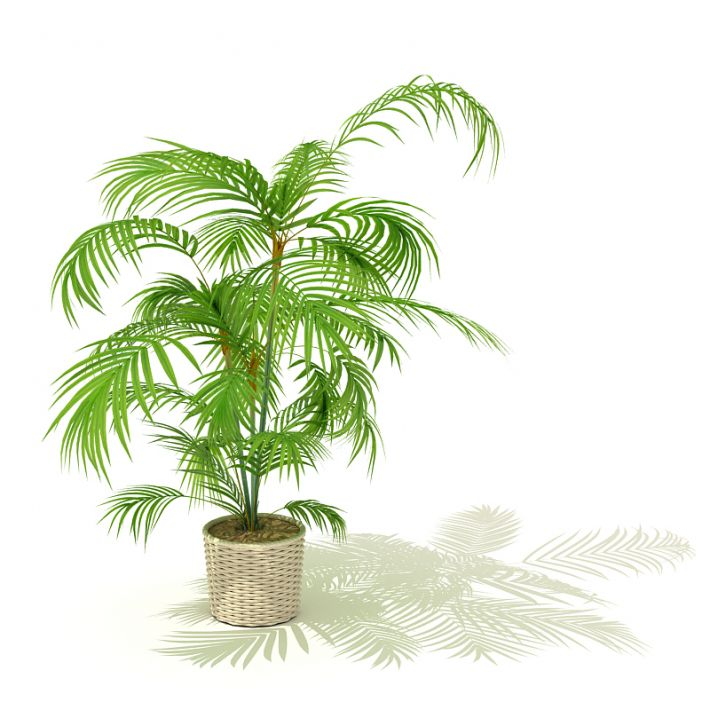 plant 01 AM41