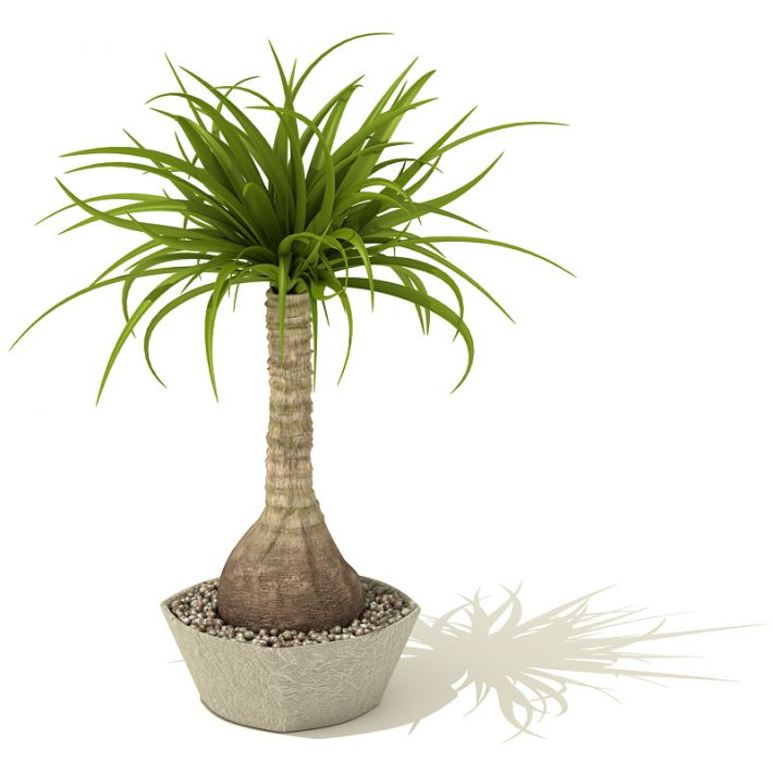 plant 24 AM41 Archmodels