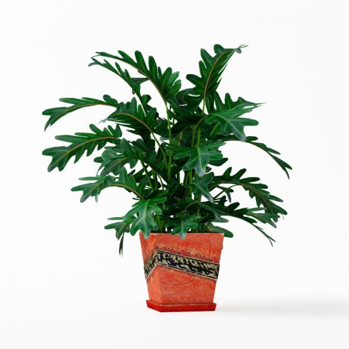 Plant 25 AM75 Archmodels