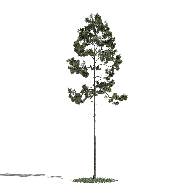 Tree 45 AM1 for Blender Archmodels