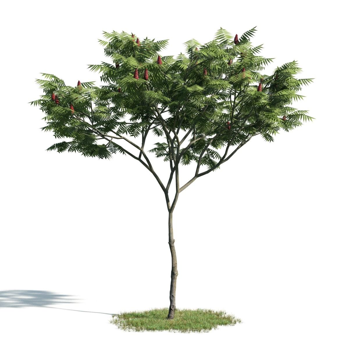 Tree 5 AM171 Archmodels