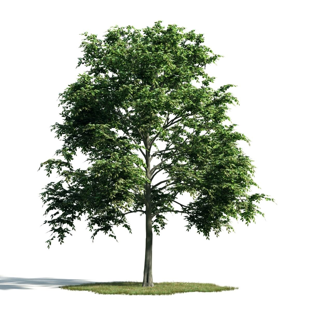 Tree 11 am171