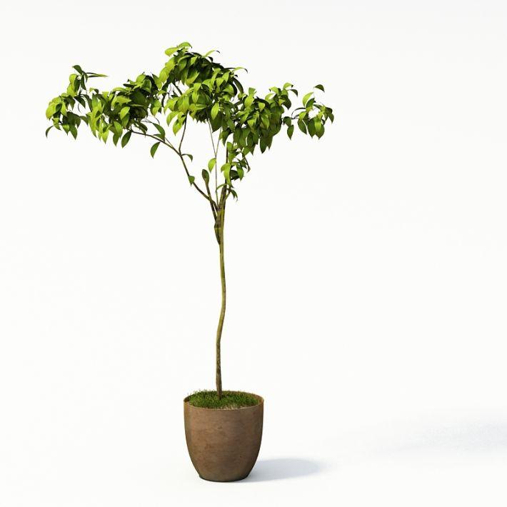 Plant 5 AM24 Archmodels