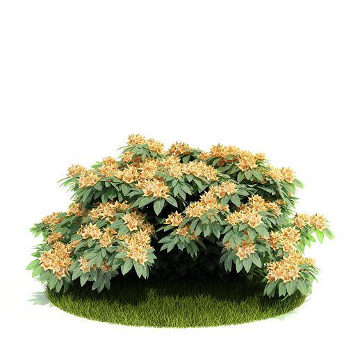 Plant 34 AM52