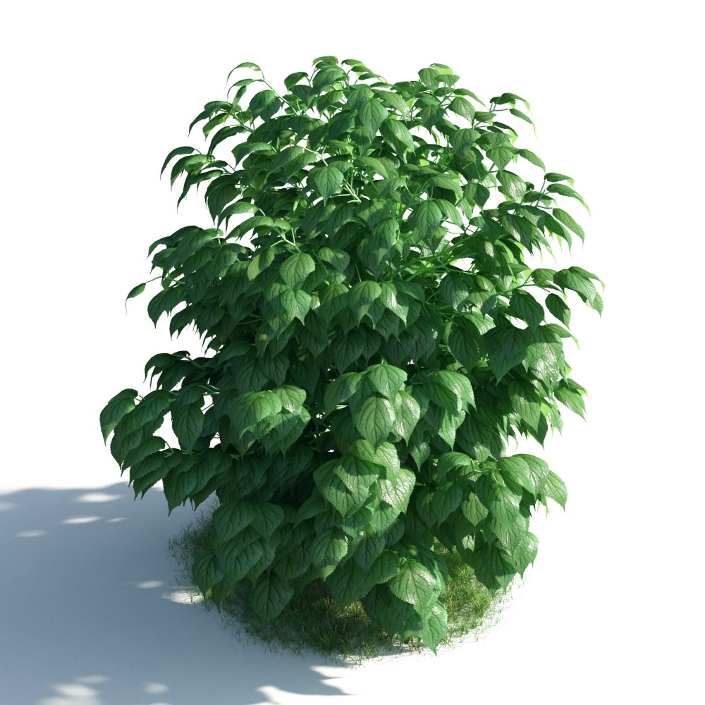 plant 28 AM183