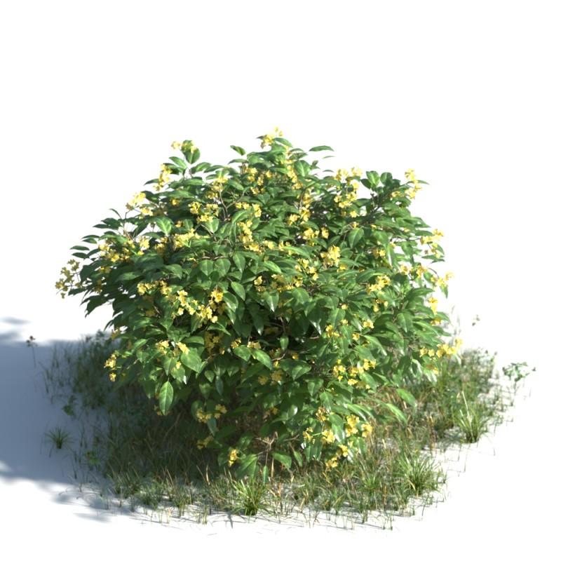 plant 10 AMC1