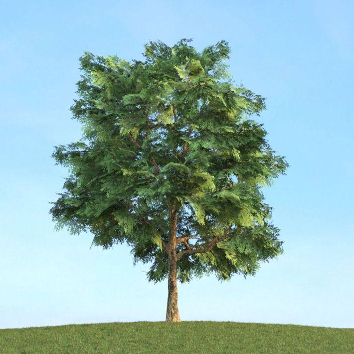 Quercus 3 AM113 Archmodels