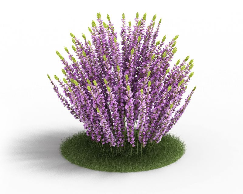 Calluna 3 AM3 for Cinema4D Archmodels