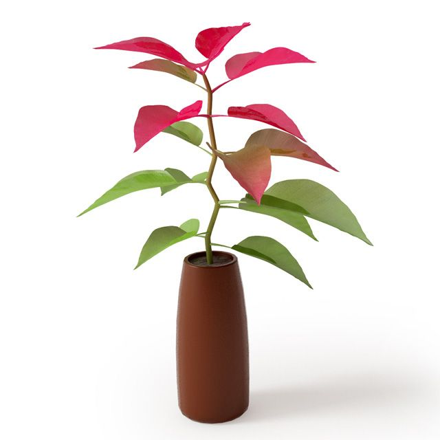 Plant 6 Archmodels vol. 66