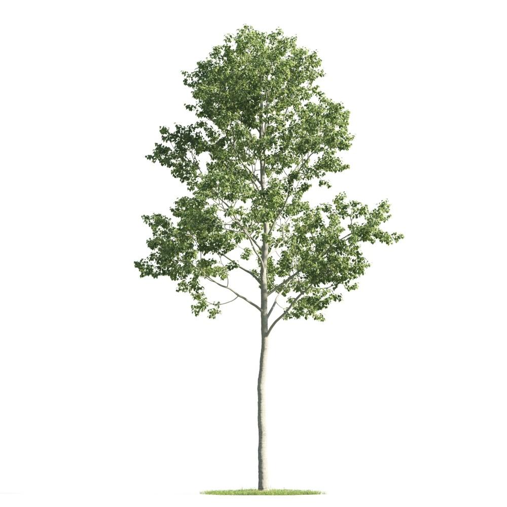 Tree 28 am176