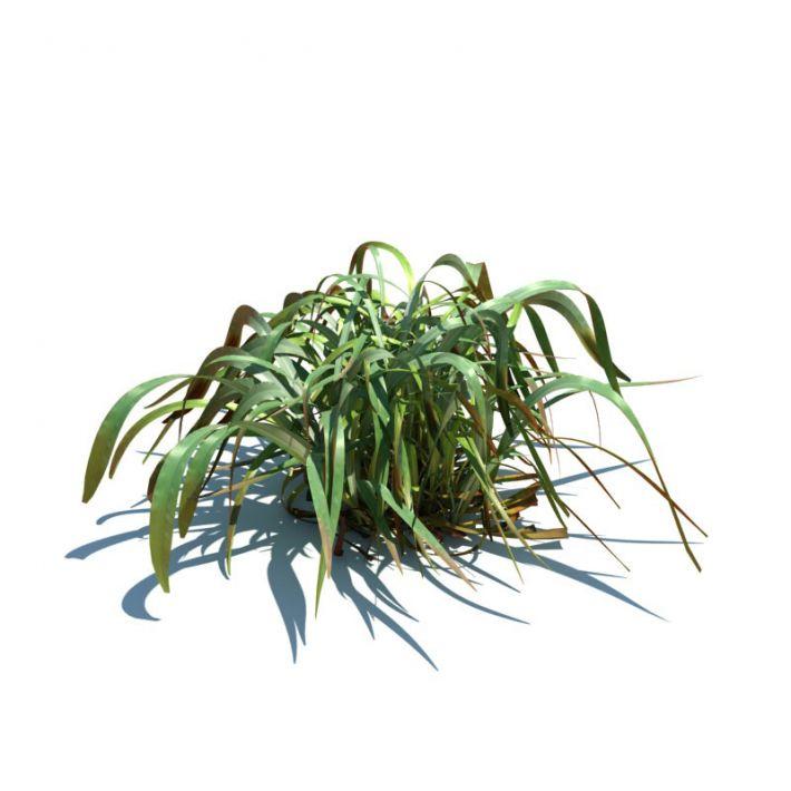 Spodiopogon sibiricus 70 AM126 Archmodels