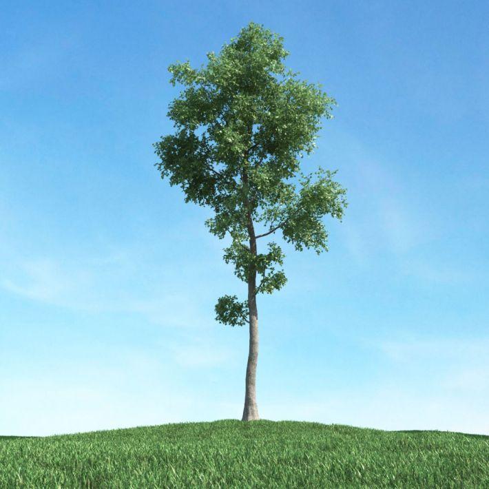 tree 25 am117