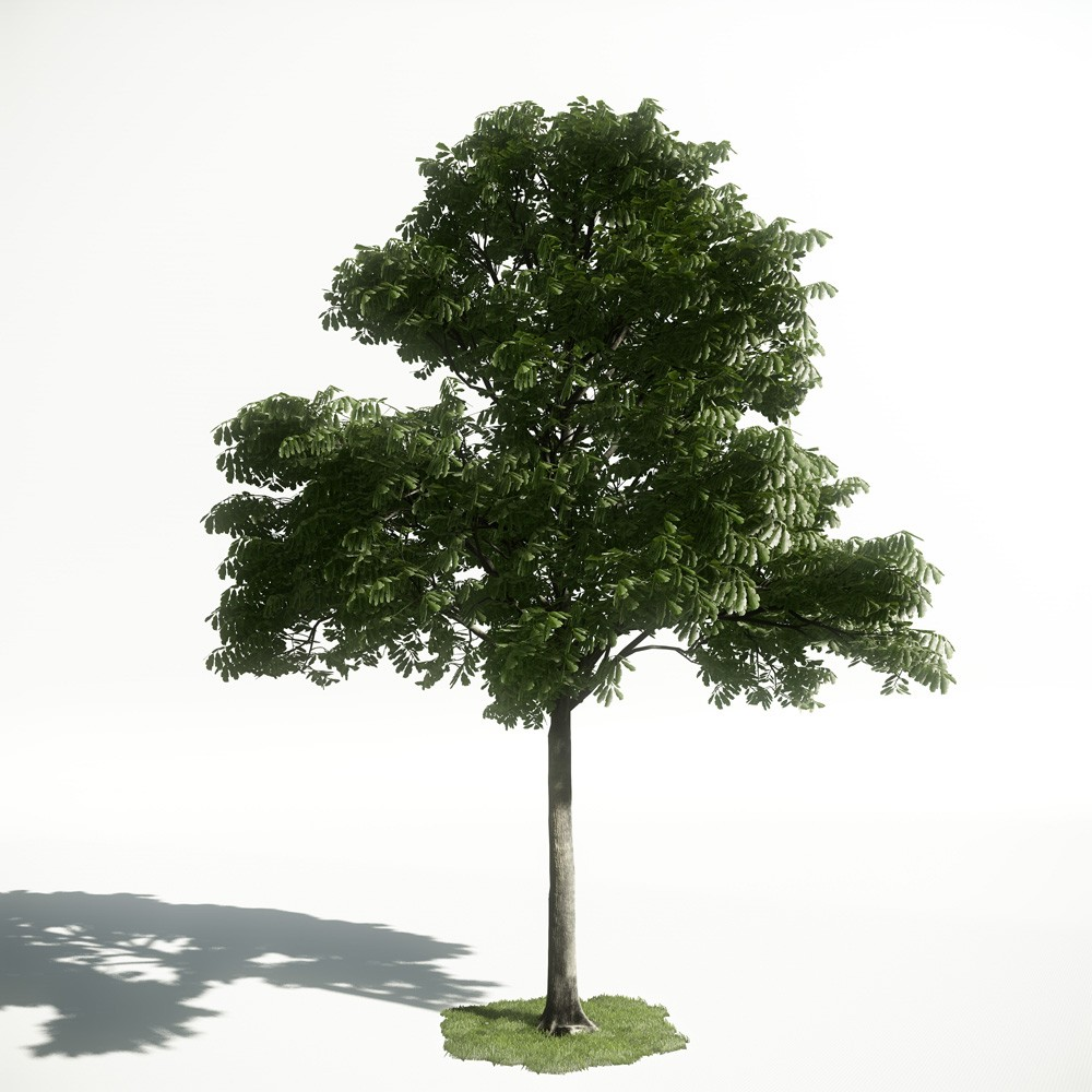 Tree 31 AM1 for CryEngine Archmodels