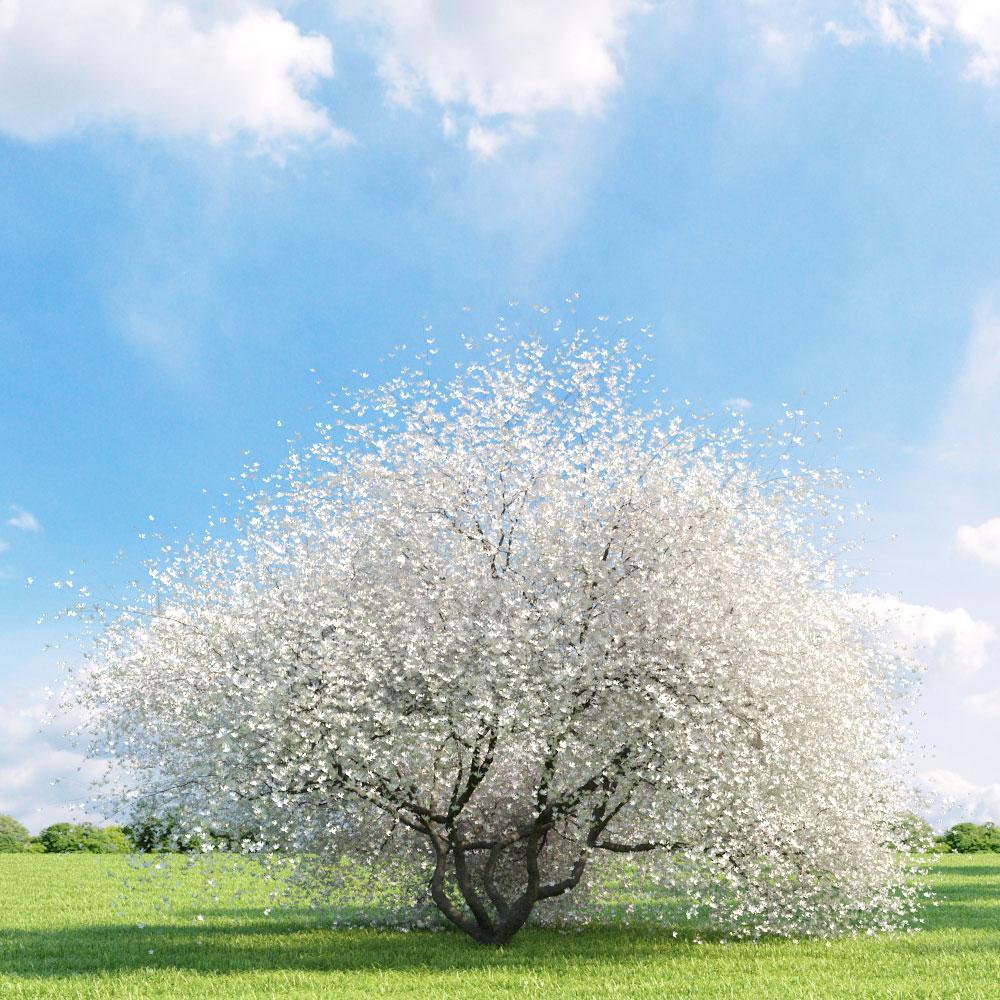 Magnolia 32 v1 AM136 Archmodels