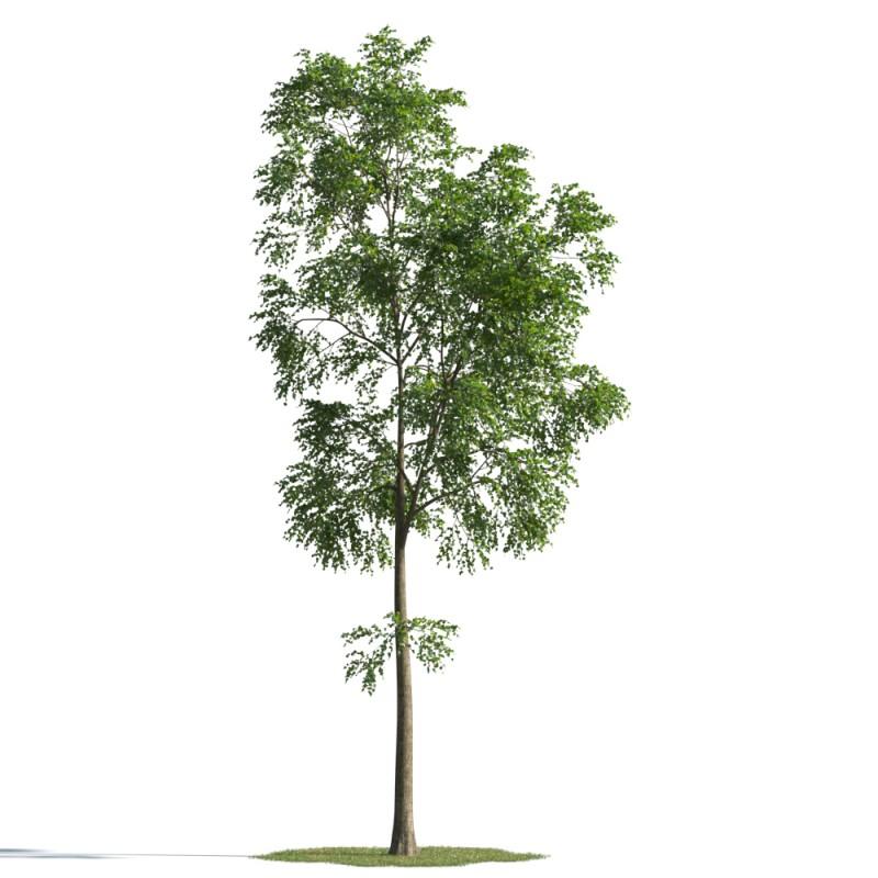 tree 42 AMC01