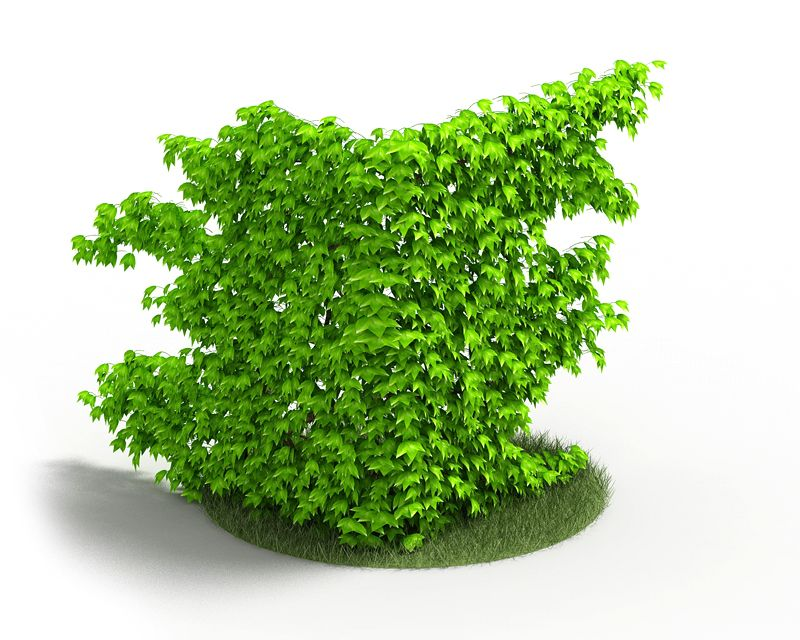 Plant 40 AM4 for Cinema4D Archmodels