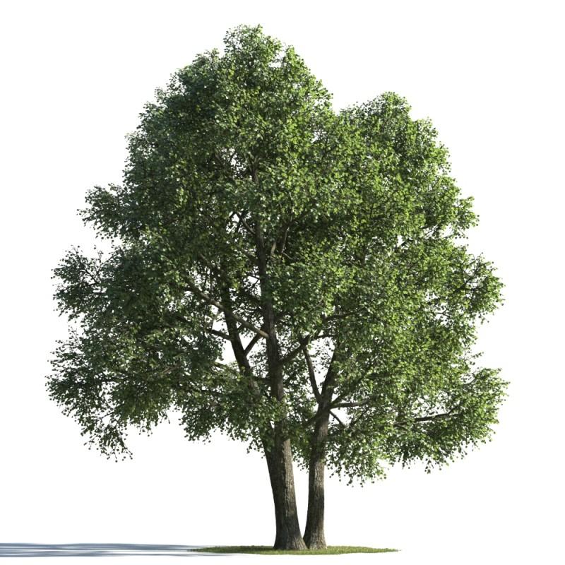 tree 92 AMC01