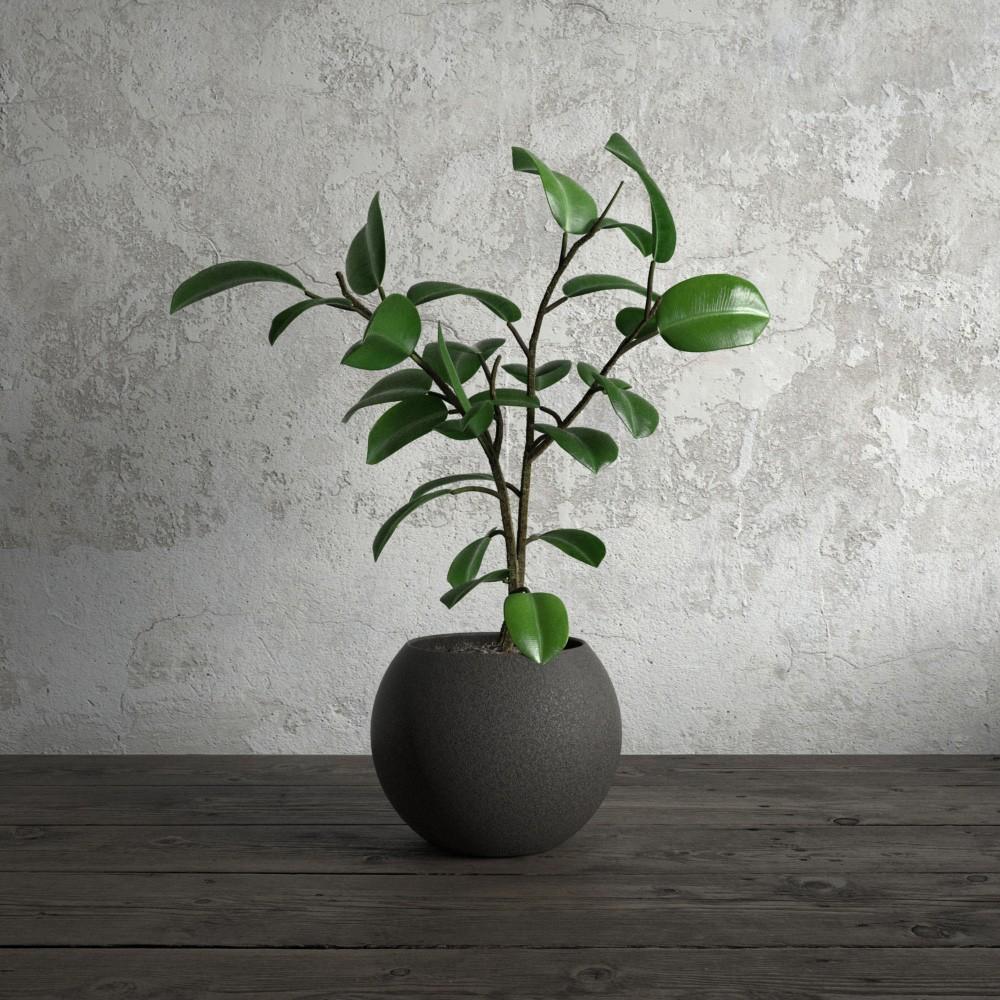 plant 55 AM173 Archmodels