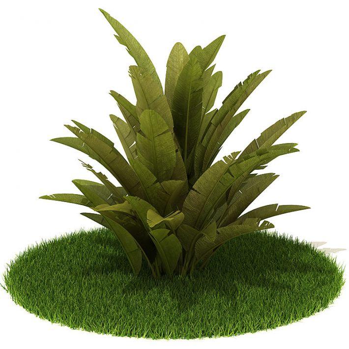 Plant 33 AM42