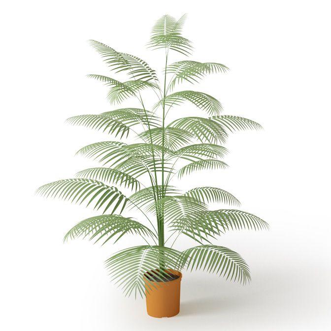 Plant 45 Archmodels vol. 66