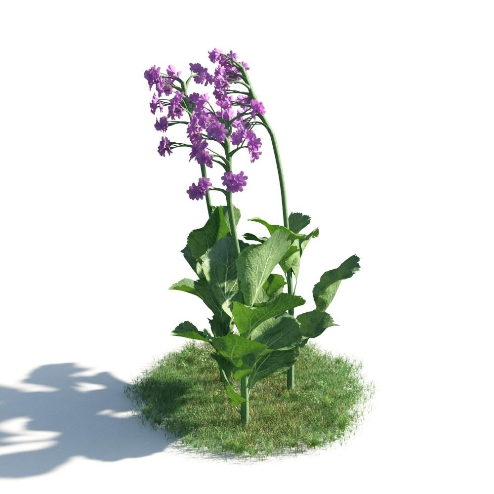 plant 10 AM183