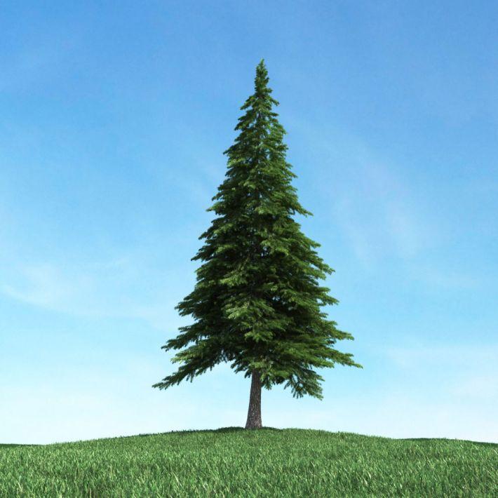 tree 07 am117