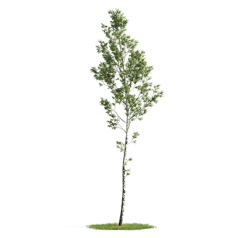 Tree 03 am176