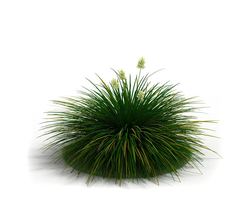 Festuca idahoensis 42 AM3 for Cinema4D Archmodels