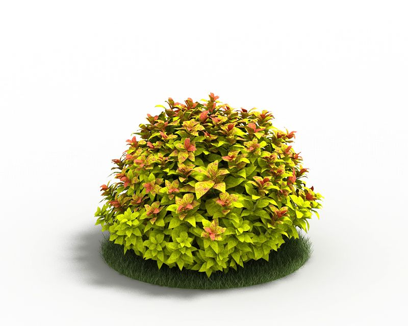 Spiraea 26 AM3 for Cinema4D Archmodels