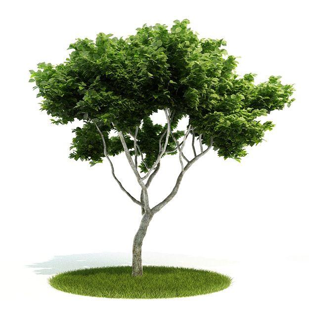 Plant 46 AM52 Archmodels