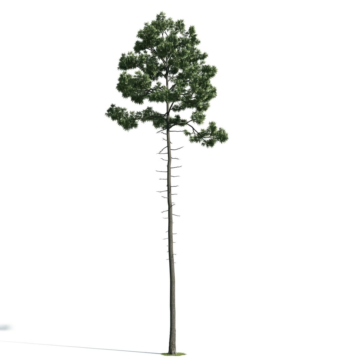 Tree 36 AM171 Archmodels