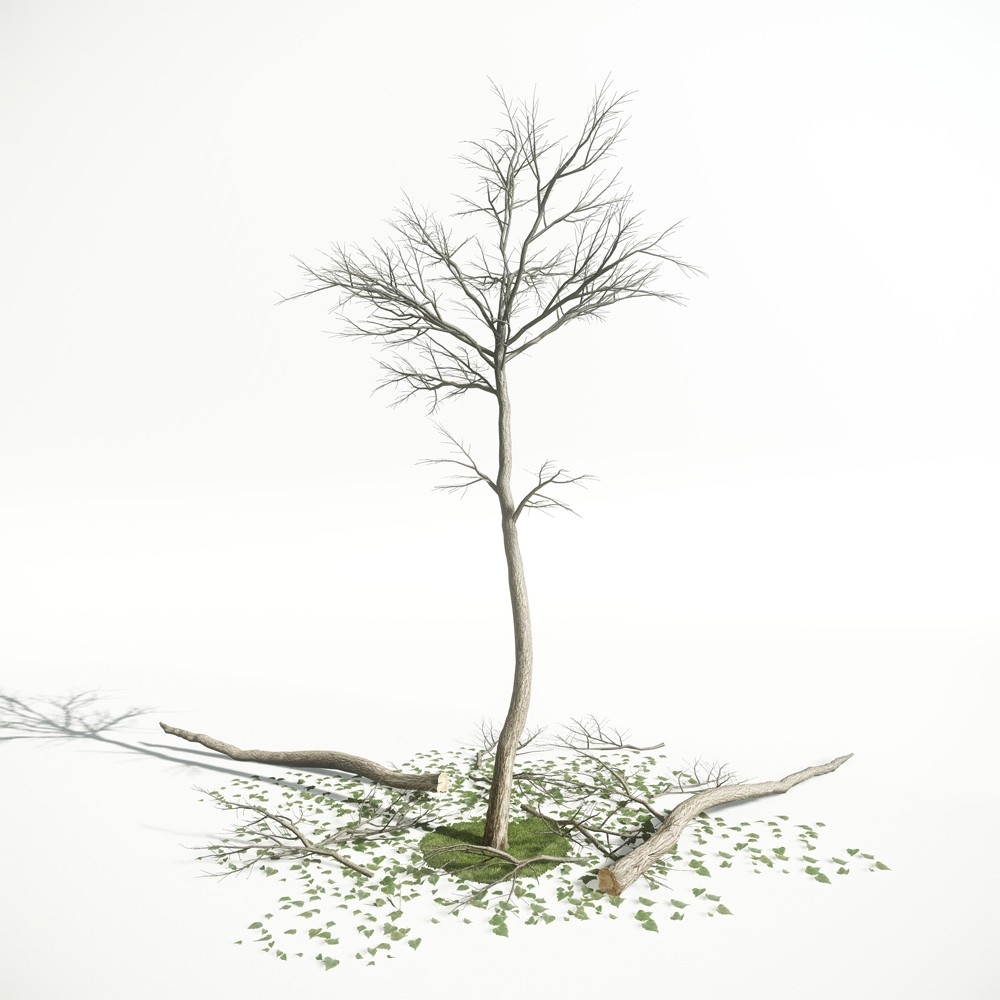 Tree 60 AM1 for CryEngine Archmodels