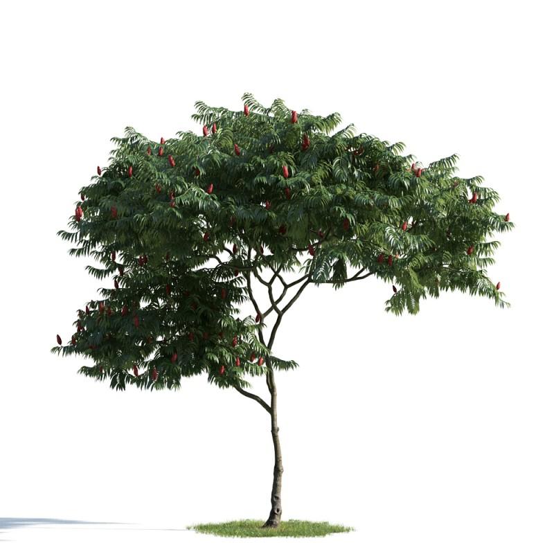 tree 6 AM163 Archmodels