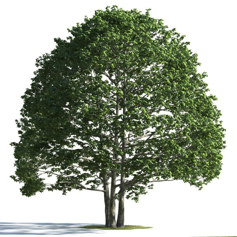 tree 28 AMC1