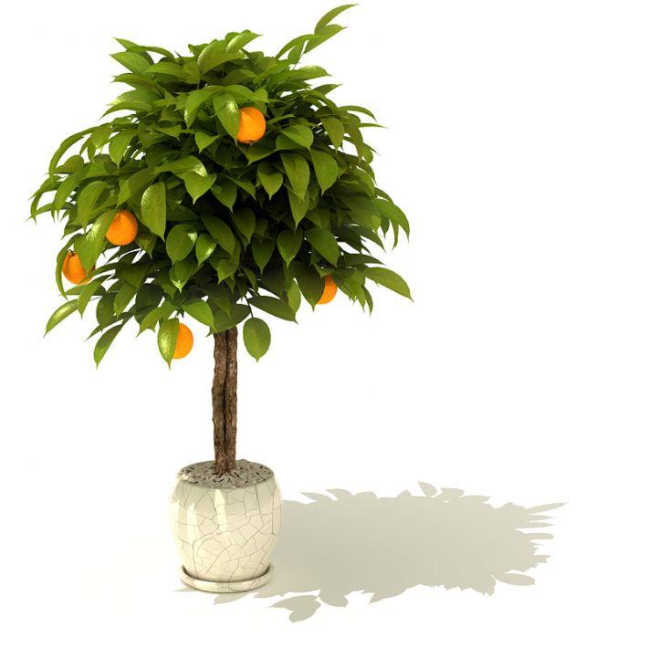 plant 32 AM41