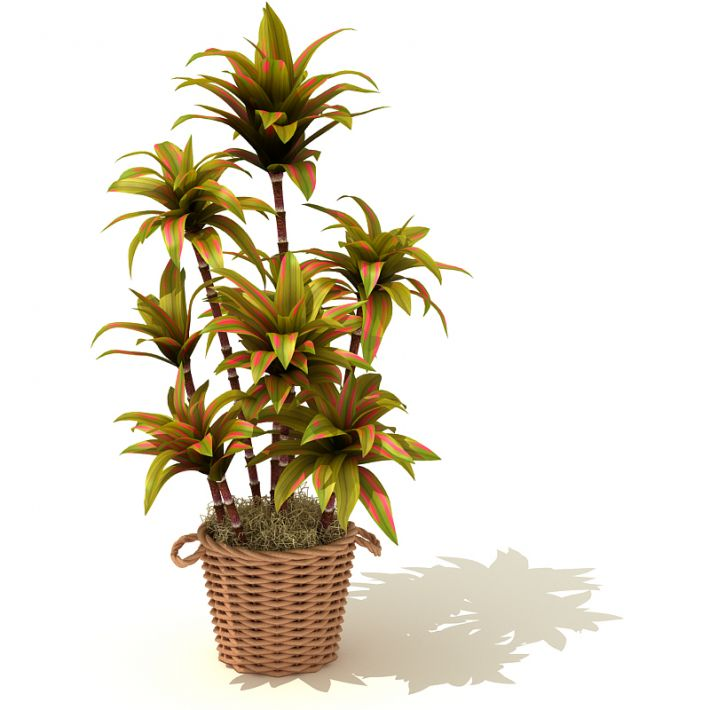 plant 62 AM41