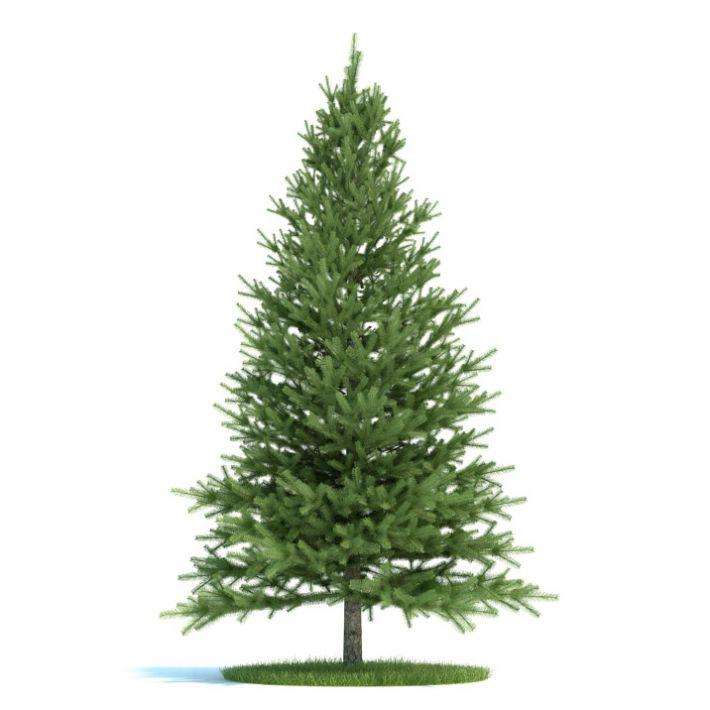Pinus Plant 19 AM58 Archmodels